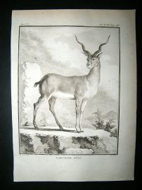 Buffon: C1770 Male Antelope, Antique Print